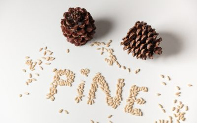 Pine Nuts – a treasure of the Mediterranean diet